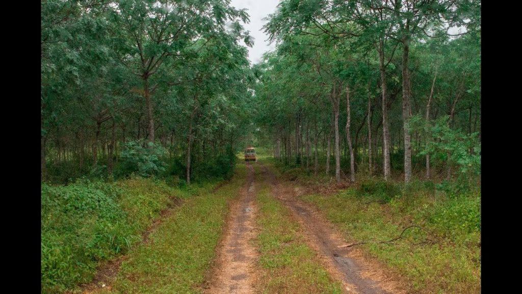 Ett inkomstflöde från trädplantering