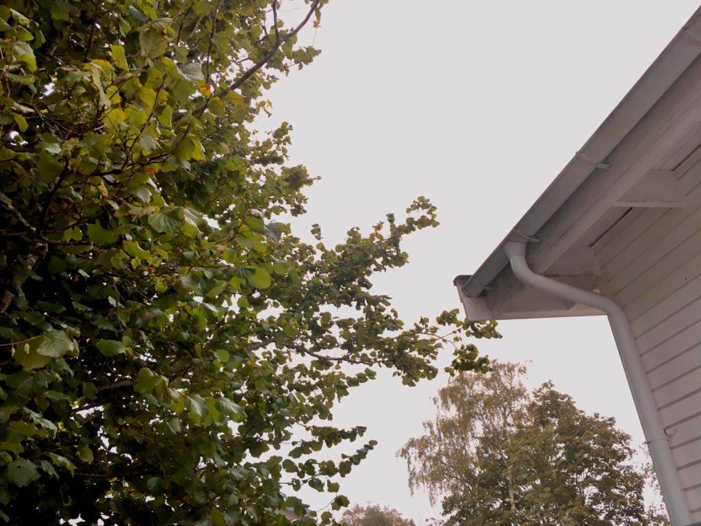Grenar mot taket stör hyresgästen